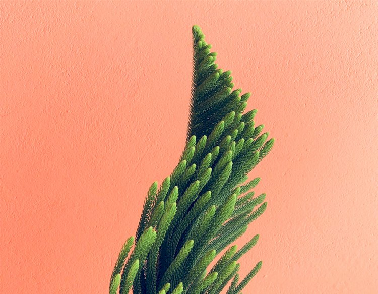 Bakımı Kolay ve Evinizi Güzelleştirecek 5 Bitki
