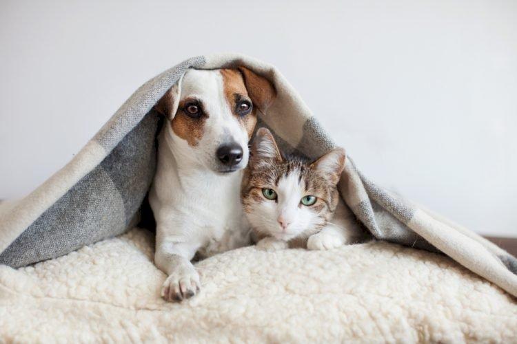 Kanepedeki Köpek Tüylerini Nasıl Temizleyebilirsiniz?
