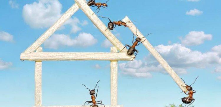 Karıncalardan Kurtulmanın Doğal Bir Yöntemi Var!