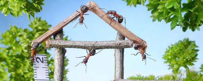 Evinizi Karınca Ve Sineklerden Arındırmanın 5 Yolu